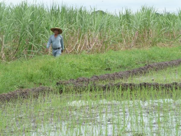 Landbouwkundige Fernando